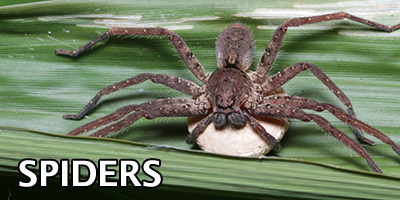 Spiders---Bug-Z